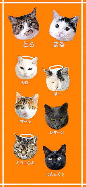 登場する猫たち